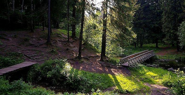 Ходить в лес надо осторожно
